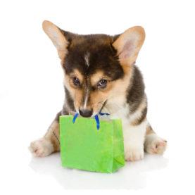 stock-photo--puppy-bearing-gift-isolated-on-white-background-127695995